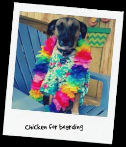 Chicken for boarding